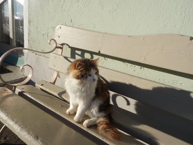 O gato muito macio senta-se em um banco fotos de stock royalty free