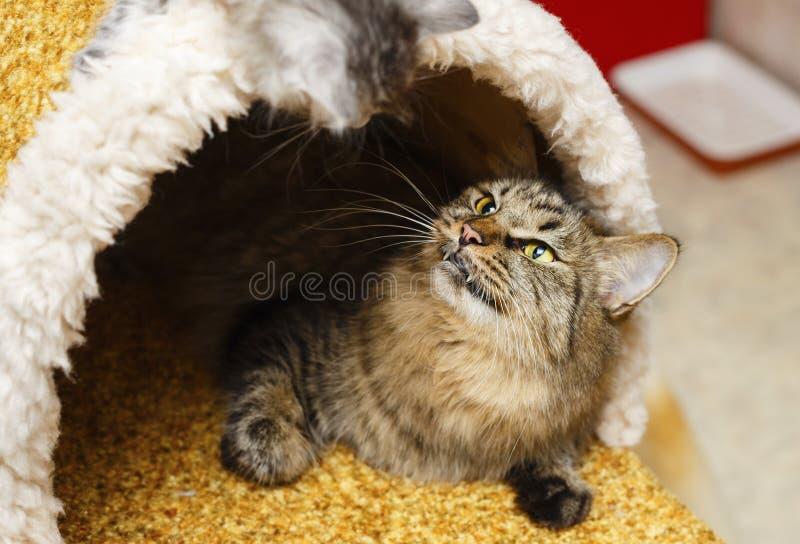 O gato na casa do gato fotografia de stock royalty free