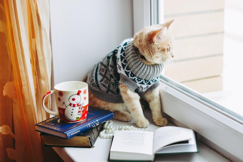 O gato na soleira senta e olha para fora a janela imagem de stock