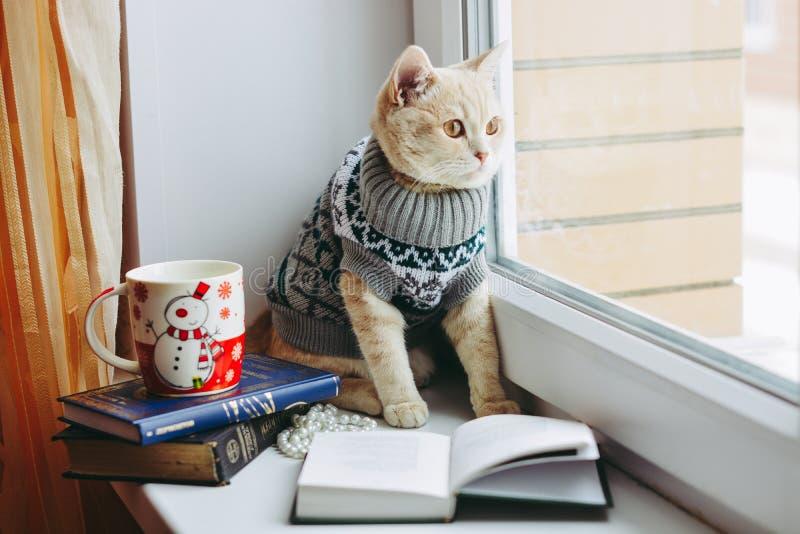 O gato na soleira senta e olha para fora a janela foto de stock royalty free