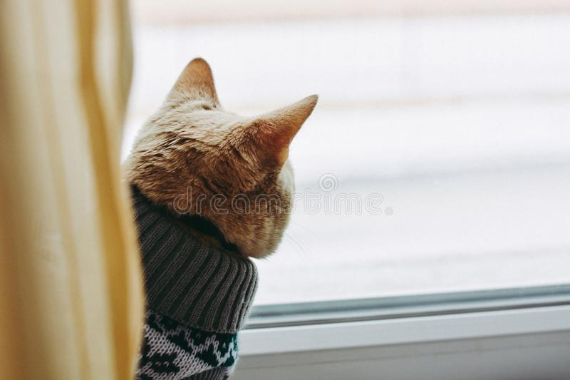 O gato na soleira senta e olha para fora a janela fotos de stock