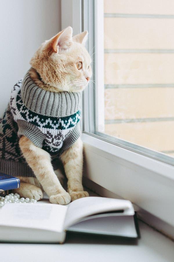O gato na soleira senta e olha para fora a janela fotografia de stock royalty free
