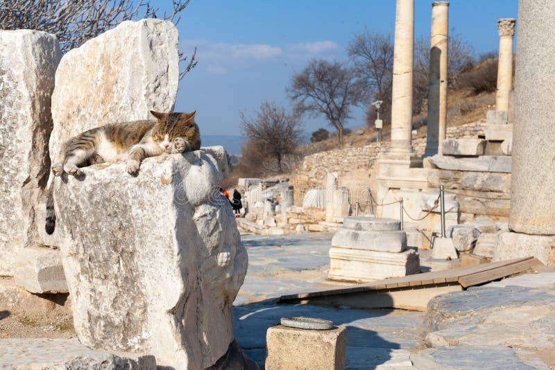 O gato nas colunas e no altar de pedra romanos arruina a sala no arco do ephesus imagem de stock royalty free