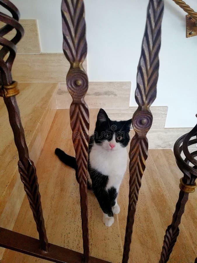 O gato nas escadas fotografia de stock