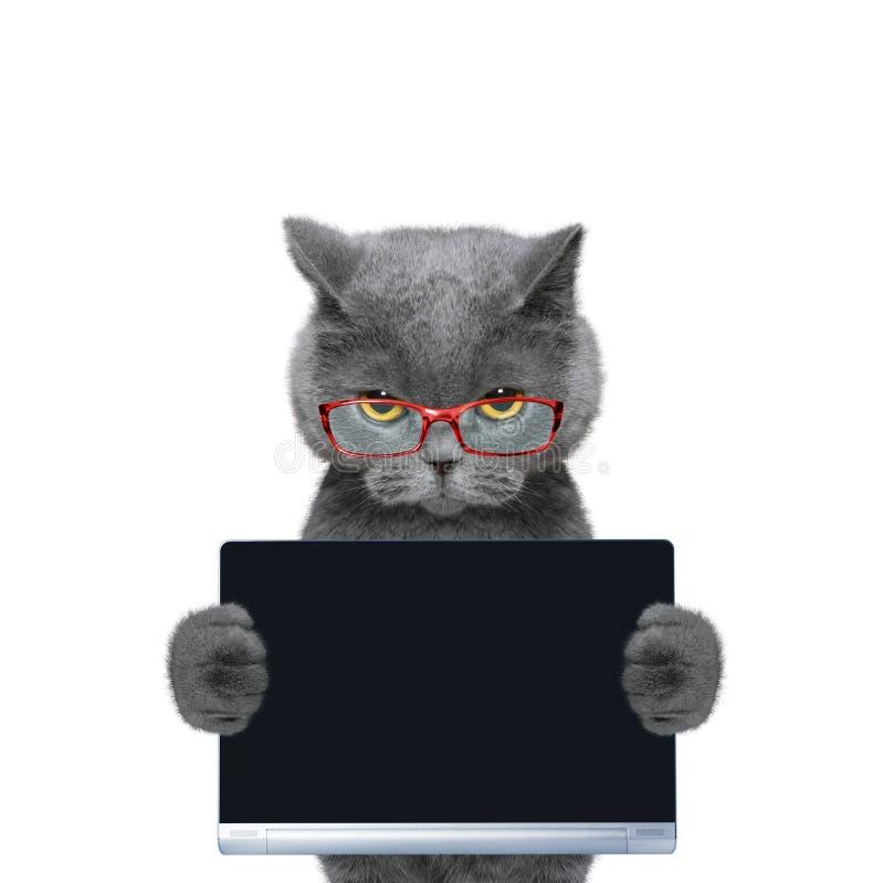 O gato nos vidros guarda uma tabuleta ou um portátil imagens de stock royalty free
