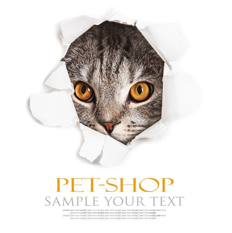 O gato olha através de um furo no papel fotos de stock