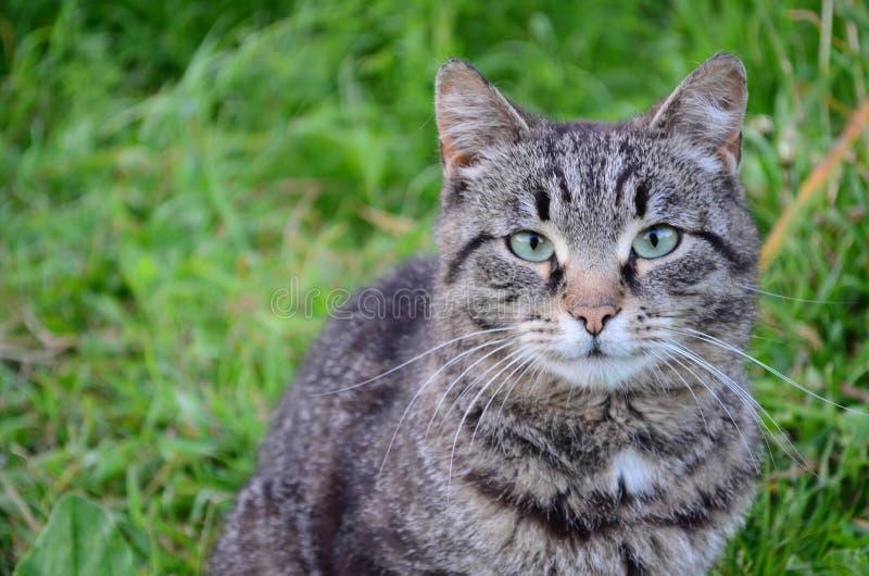 O gato pelo rio senta-se na grama imagem de stock royalty free