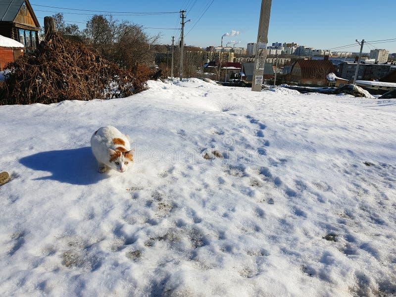 O gato prepara-se para saltar na neve na mola ou no inverno foto de stock royalty free