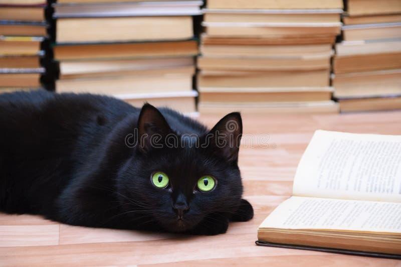O gato preto encontra-se no assoalho ao lado de um livro aberto Livros no fundo Coseup fotografia de stock royalty free