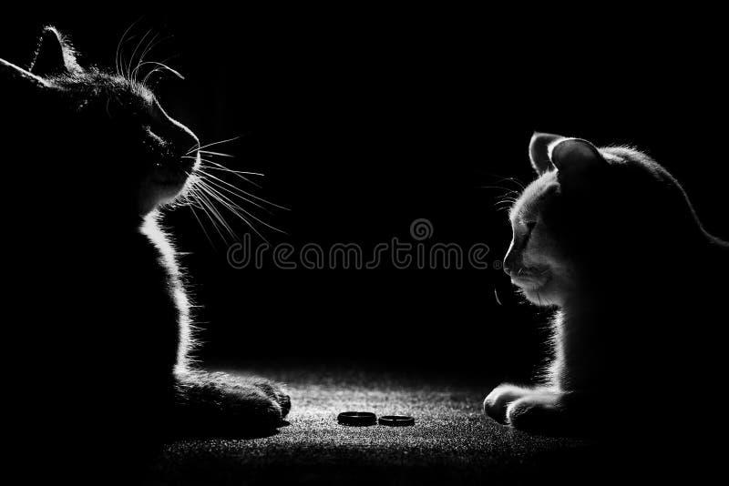 O gato preto está jogando com aliança de casamento fotografia de stock royalty free