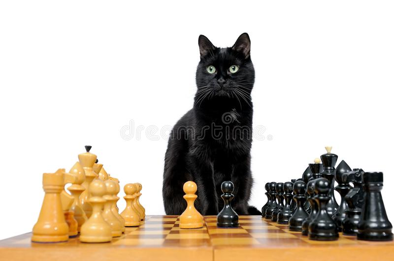 O gato preto senta-se perto da xadrez imagem de stock