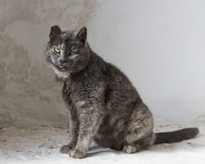 O gato que andou só foto de stock