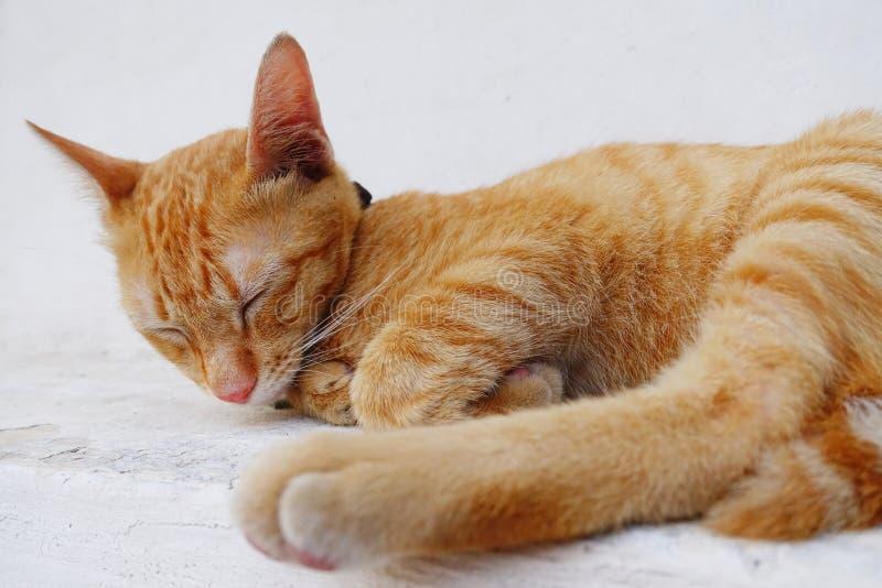 O gato que dorme imagem de stock
