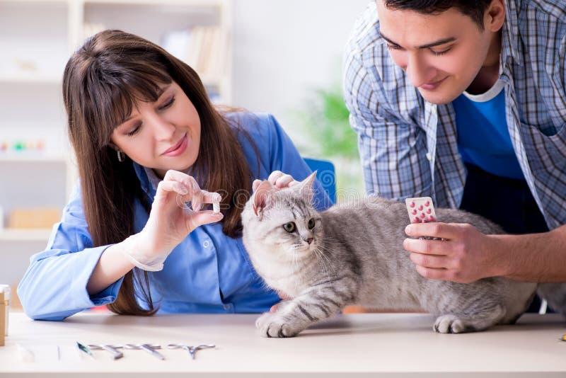O gato que examina na clínica do veterinário fotografia de stock