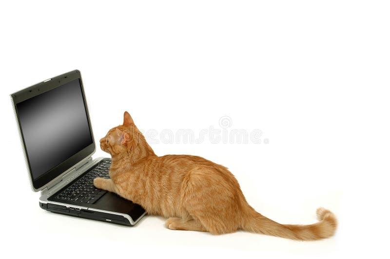 O gato que lokking em scrren imagens de stock