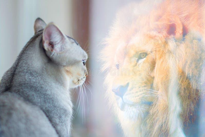 O gato que olha o espelho e vê-se como um leão Conceito do amor-próprio ou do desejo foto de stock royalty free