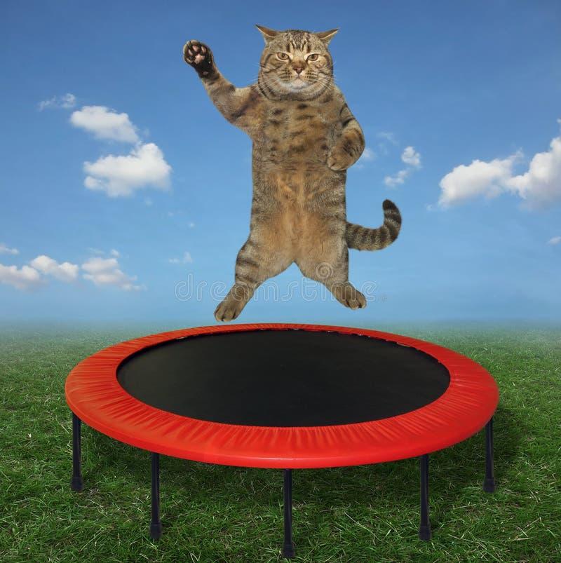 O gato que salta em um trampolim 2 fotografia de stock
