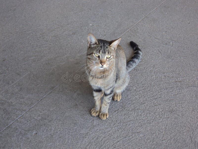 O gato só foto de stock