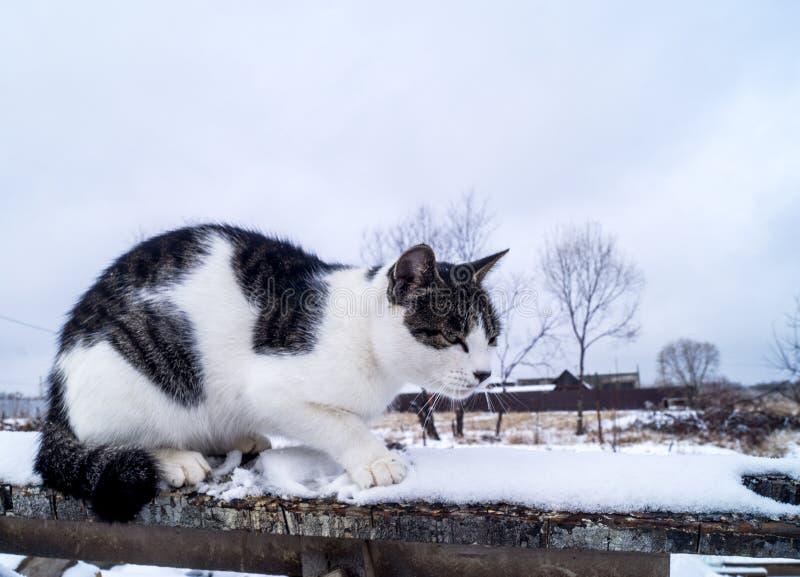 O gato senta-se em um ramo de árvore fora no inverno imagens de stock royalty free