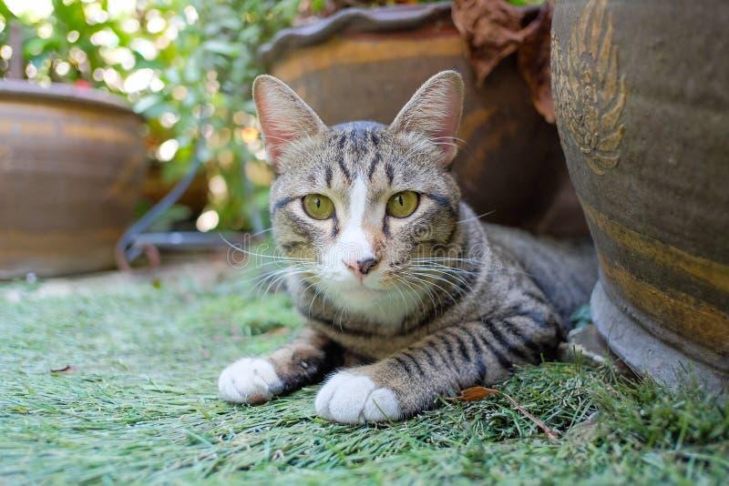 O gato senta-se nas gramas fotos de stock