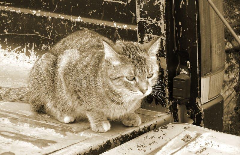 Download O Gato Suporta Sobre Do Camionete Velho Foto de Stock - Imagem de sumário, original: 65579882
