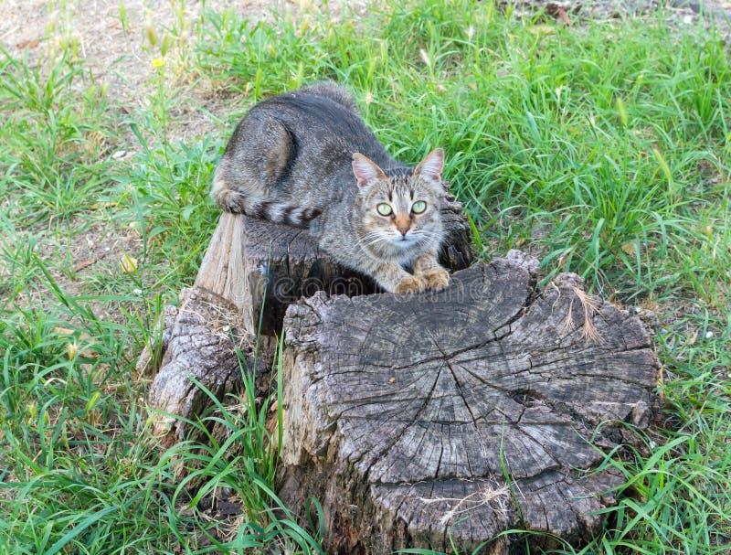 O gato tem um resto fotos de stock royalty free
