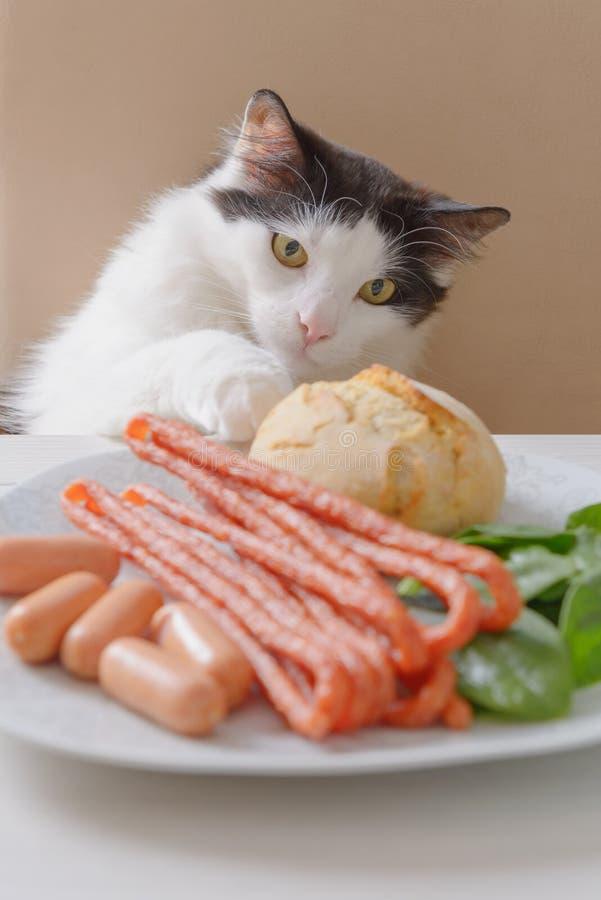 O gato tenta roubar o alimento da tabela imagem de stock