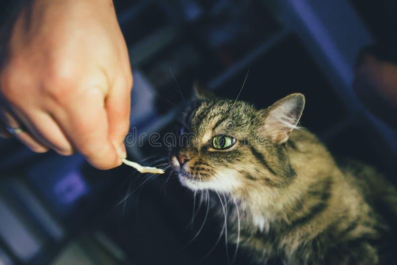 O gato toma um comprimido imagens de stock royalty free