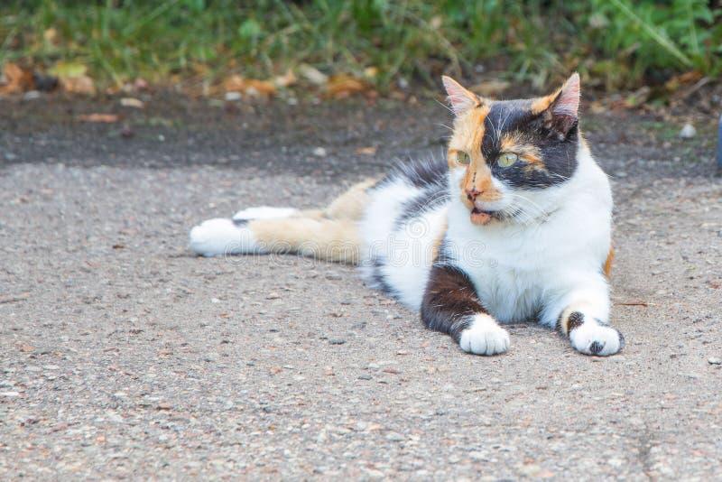 O gato tricolored bonito está sentando-se no retrocesso da estrada fotos de stock royalty free