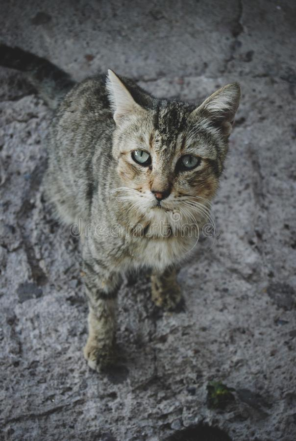 O gato velho parece ser vista doente cautelosamente imagem de stock