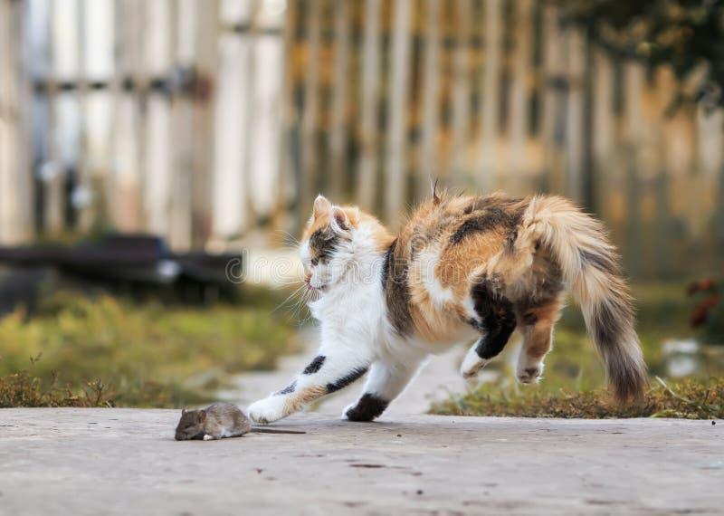 O gato vermelho caseiro macio joga com um salto cinzento travado do rato fotografia de stock royalty free