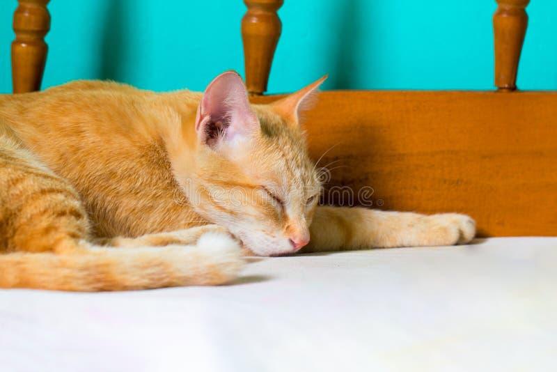 O gato vermelho dorme na cama Gato alaranjado que descansa após o almoço Gato colorido gengibre no quarto imagens de stock royalty free