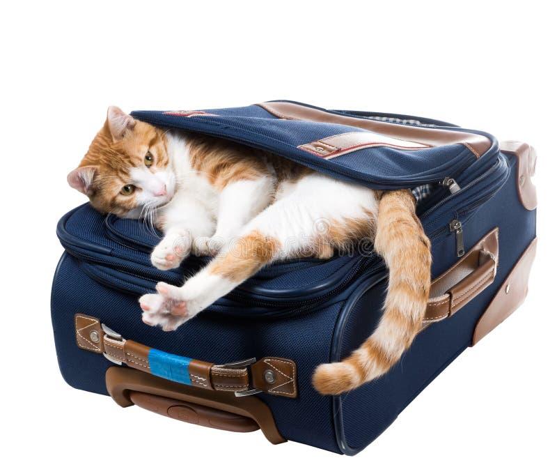 O gato vermelho está em um bolso e estica a mala de viagem imagens de stock royalty free