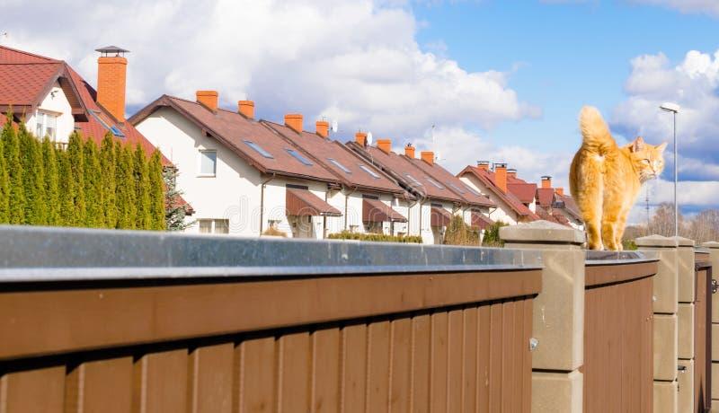 o gato vermelho gordo está andando no fencil no setor residencial bonito de casas de fileira no dia ensolarado com céu azul imagens de stock