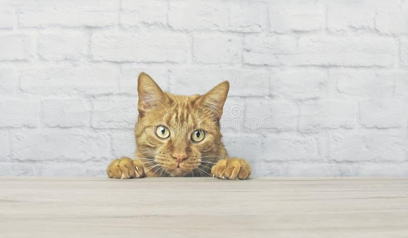 O gato vermelho impertinente está olhando curioso até a tabela fotografia de stock royalty free