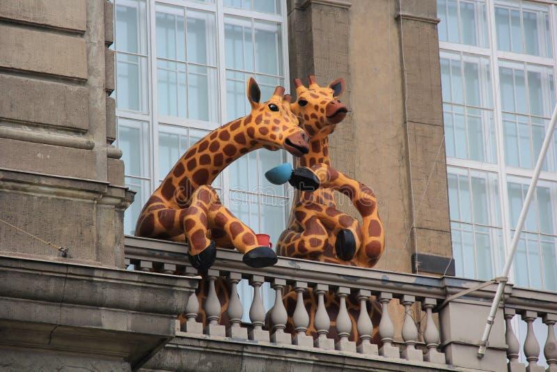 O gigante dois manchou os girafas que bebem o chá em um balcão aberto imagens de stock royalty free