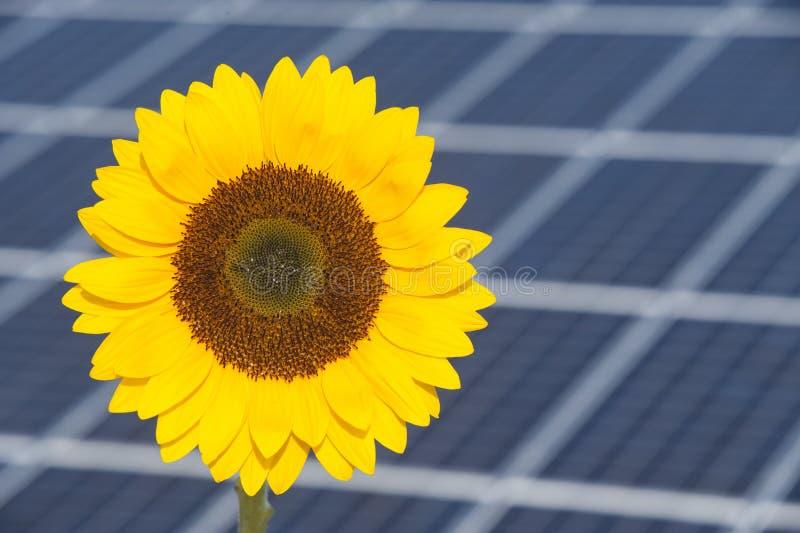 O girassol e o painel solar da energia elétrica postam como o símbolo para a energia renovável imagens de stock
