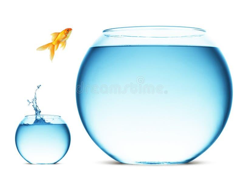 O Goldfish que salta da bacia fotografia de stock