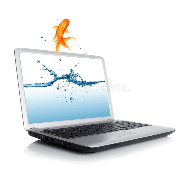 O Goldfish que salta do monitor imagens de stock