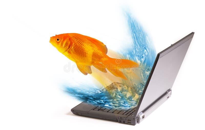 O Goldfish que salta do portátil imagem de stock