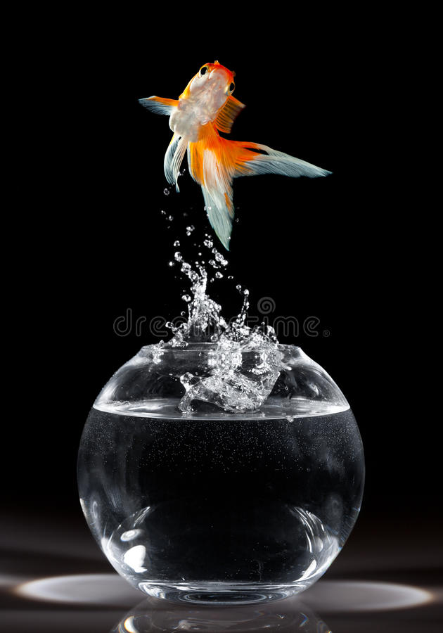 O Goldfish salta foto de stock royalty free
