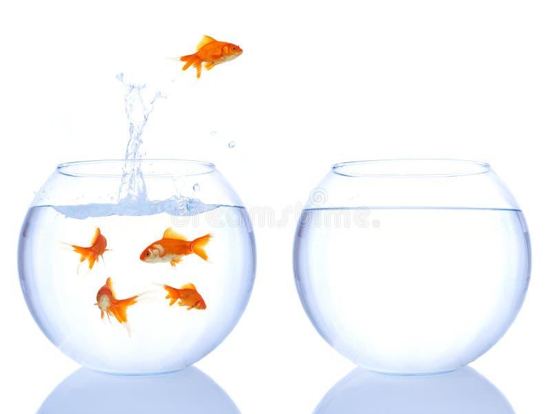 O Goldfish salta imagens de stock