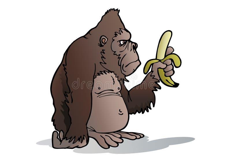 O Gorila Da Prata-para Trás Come A Banana Imagem de Stock