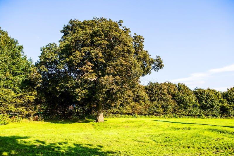 O gramado verde e as árvores velhas no país de Margam estacionam terras, baleias imagem de stock