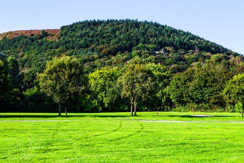 O gramado verde e as árvores velhas no país de Margam estacionam terras, baleias imagens de stock royalty free
