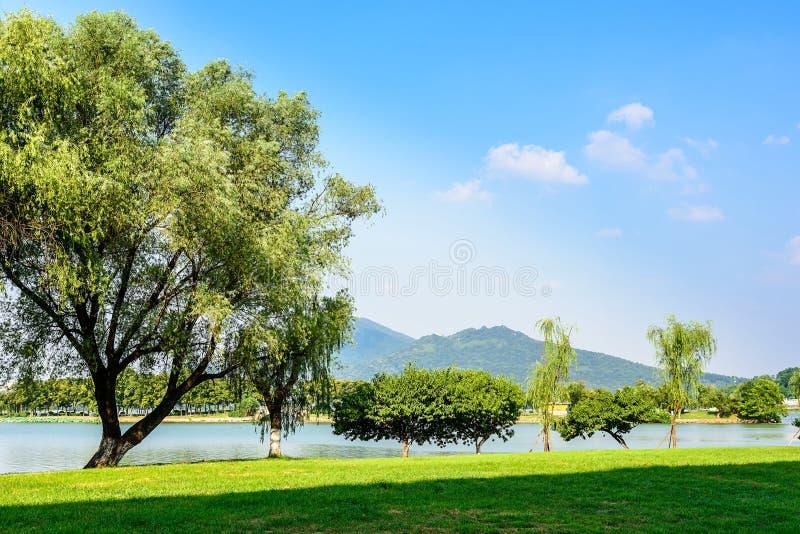 O gramado verde e a montanha roxa foto de stock royalty free
