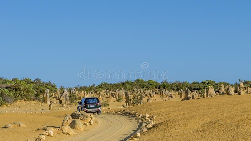 O grande carro de SUV do tamanho cruza os pináculos abandona antes do por do sol, Austrália Ocidental imagem de stock