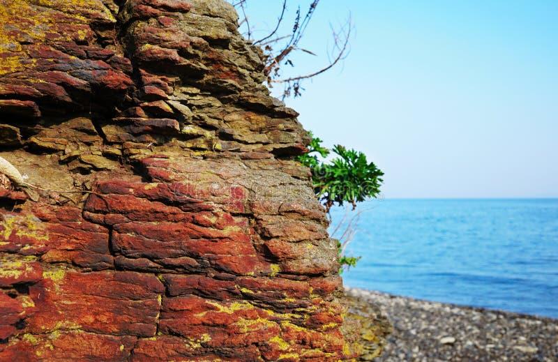 O grande close-up vermelho da rocha com uma planta verde contra o mar imagem de stock royalty free