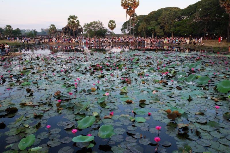 O grande grupo de turistas admira a lagoa em que os l?tus crescem Olhar dos povos no imagens de stock royalty free