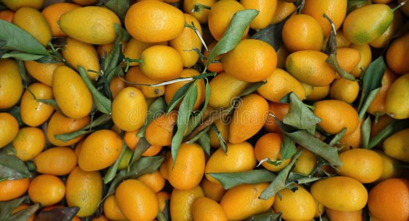 O grande montão dos kumquats, japonica do citrino é o nome, o fundo do alimento e a textura científicos fotografia de stock royalty free